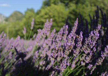 Das Fest der Gewürz- und Heilpflanzen: Restons pas plantés là!